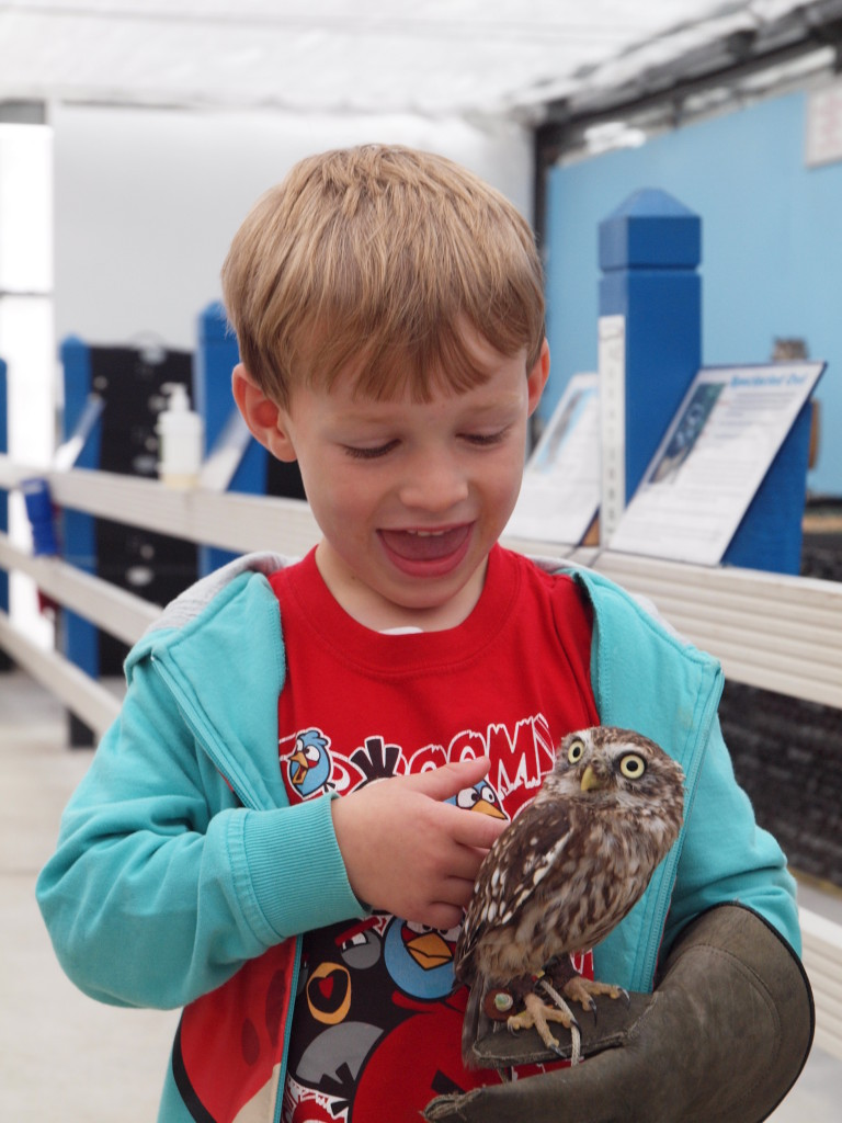 A boy wearing a raptor handling glove with a live owl
